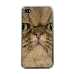 Cute Persian Catface In Closeup Apple Iphone 4 Case (clear)