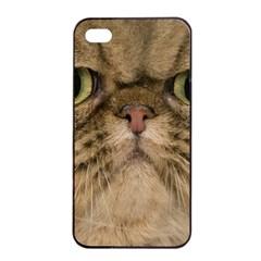 Cute Persian Catface In Closeup Apple Iphone 4/4s Seamless Case (black)