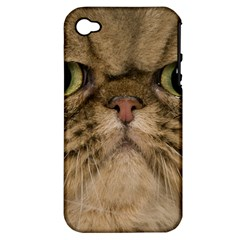 Cute Persian Catface In Closeup Apple Iphone 4/4s Hardshell Case (pc+silicone)