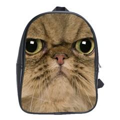 Cute Persian Catface In Closeup School Bags (xl)
