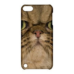 Cute Persian Catface In Closeup Apple Ipod Touch 5 Hardshell Case With Stand