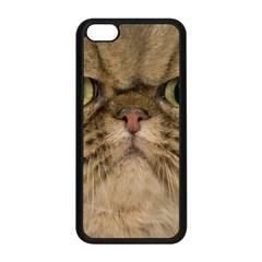 Cute Persian Catface In Closeup Apple Iphone 5c Seamless Case (black)