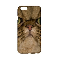 Cute Persian Catface In Closeup Apple Iphone 6/6s Hardshell Case