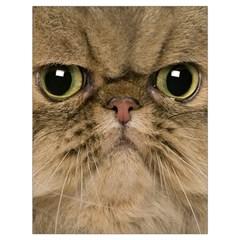 Cute Persian Catface In Closeup Drawstring Bag (large)
