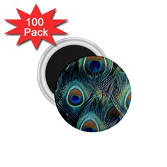Feathers Art Peacock Sheets Patterns 1 75  Magnets (100 Pack)