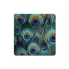 Feathers Art Peacock Sheets Patterns Square Magnet