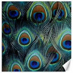 Feathers Art Peacock Sheets Patterns Canvas 12  X 12
