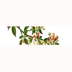 Apple Branch Deciduous Fruit Large Bar Mats