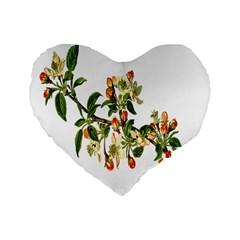 Apple Branch Deciduous Fruit Standard 16  Premium Heart Shape Cushions