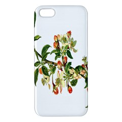 Apple Branch Deciduous Fruit Apple Iphone 5 Premium Hardshell Case