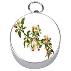 Apple Branch Deciduous Fruit Silver Compasses