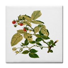 Berries Berry Food Fruit Herbal Tile Coasters