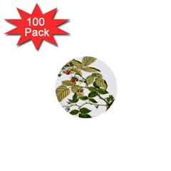 Berries Berry Food Fruit Herbal 1  Mini Buttons (100 Pack)
