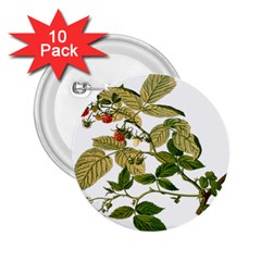 Berries Berry Food Fruit Herbal 2 25  Buttons (10 Pack)
