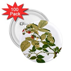 Berries Berry Food Fruit Herbal 2 25  Buttons (100 Pack)