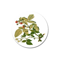 Berries Berry Food Fruit Herbal Magnet 3  (round)