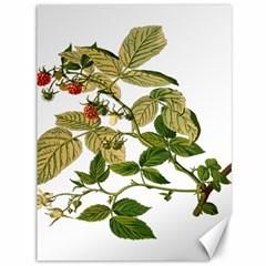 Berries Berry Food Fruit Herbal Canvas 36  X 48