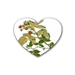 Berries Berry Food Fruit Herbal Heart Coaster (4 Pack)