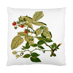 Berries Berry Food Fruit Herbal Standard Cushion Case (two Sides)