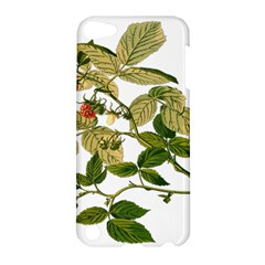 Berries Berry Food Fruit Herbal Apple Ipod Touch 5 Hardshell Case