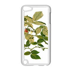 Berries Berry Food Fruit Herbal Apple Ipod Touch 5 Case (white)