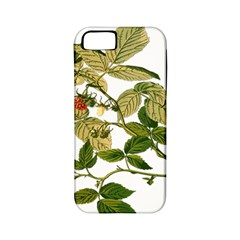 Berries Berry Food Fruit Herbal Apple Iphone 5 Classic Hardshell Case (pc+silicone)