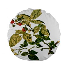 Berries Berry Food Fruit Herbal Standard 15  Premium Round Cushions