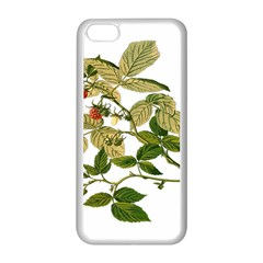 Berries Berry Food Fruit Herbal Apple Iphone 5c Seamless Case (white)