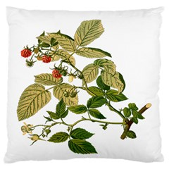 Berries Berry Food Fruit Herbal Large Flano Cushion Case (two Sides)