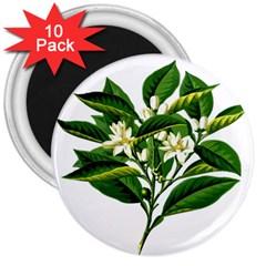 Bitter Branch Citrus Edible Floral 3  Magnets (10 Pack)
