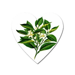 Bitter Branch Citrus Edible Floral Heart Magnet