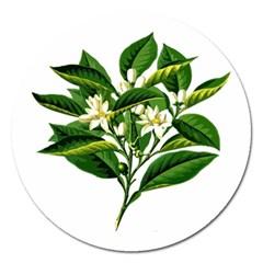 Bitter Branch Citrus Edible Floral Magnet 5  (round)