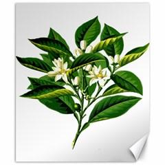 Bitter Branch Citrus Edible Floral Canvas 8  X 10