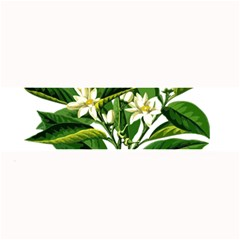 Bitter Branch Citrus Edible Floral Large Bar Mats