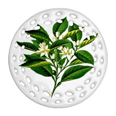 Bitter Branch Citrus Edible Floral Round Filigree Ornament (two Sides)