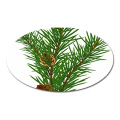 Branch Floral Green Nature Pine Oval Magnet