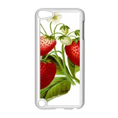 Food Fruit Leaf Leafy Leaves Apple Ipod Touch 5 Case (white)