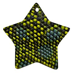 Lizard Animal Skin Ornament (star)