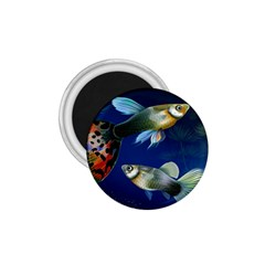 Marine Fishes 1 75  Magnets
