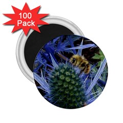 Chihuly Garden Bumble 2 25  Magnets (100 Pack)