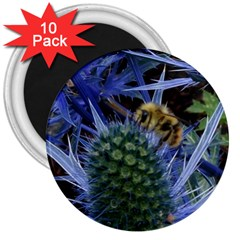 Chihuly Garden Bumble 3  Magnets (10 Pack)