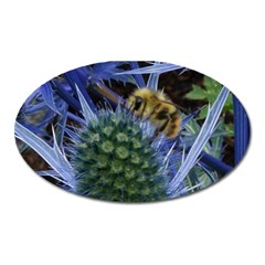 Chihuly Garden Bumble Oval Magnet