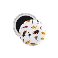 Goldfish 1 75  Magnets