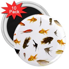 Goldfish 3  Magnets (10 Pack)