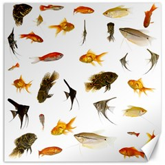 Goldfish Canvas 20  X 20