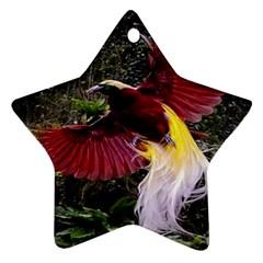 Cendrawasih Beautiful Bird Of Paradise Ornament (star)