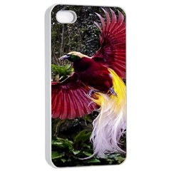 Cendrawasih Beautiful Bird Of Paradise Apple Iphone 4/4s Seamless Case (white)
