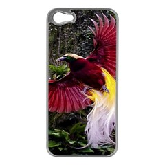 Cendrawasih Beautiful Bird Of Paradise Apple Iphone 5 Case (silver)