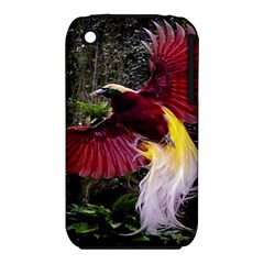 Cendrawasih Beautiful Bird Of Paradise Iphone 3s/3gs