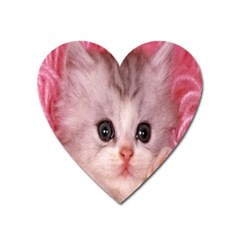 Cat  Animal  Kitten  Pet Heart Magnet